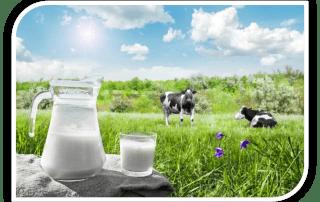 Молоко коровье свойства
